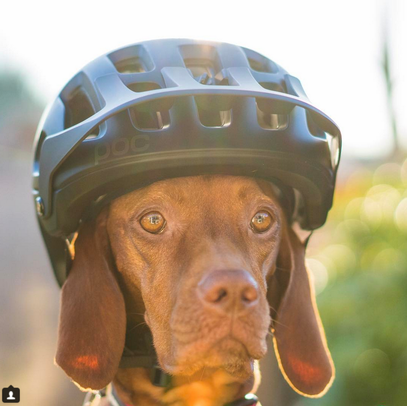 Ruby the Trail Dog. Bicycles Create Change.com 18th April 2018.