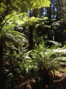 Beautiful fern forest